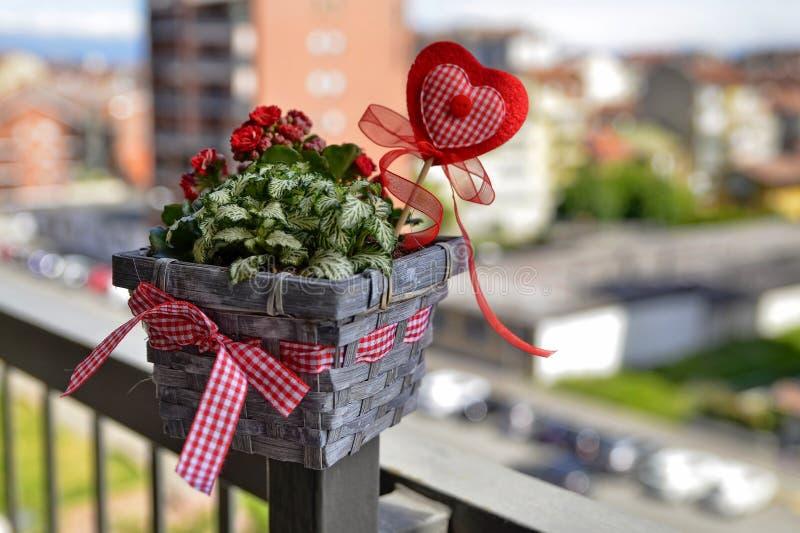 Tiro en primer en una flor peque?a y bonita imagen de archivo libre de regalías