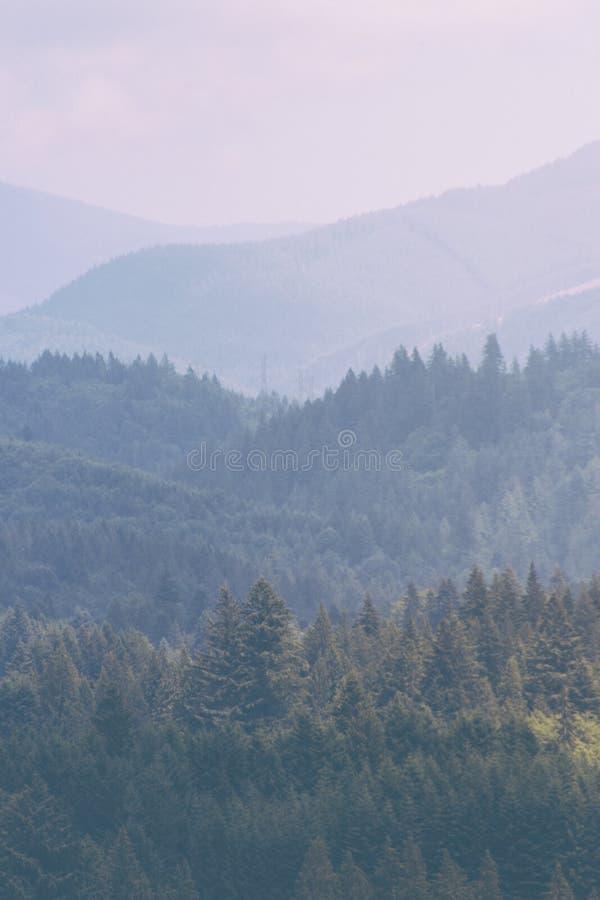 Tiro ensolarado de um lago bonito com uma árvore e do mais forrest montanhoso no fundo imagens de stock