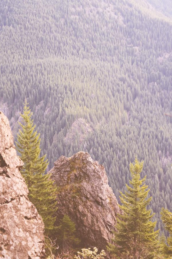 Tiro hermoso de altas montañas rocosas y de un bosque fotos de archivo libres de regalías
