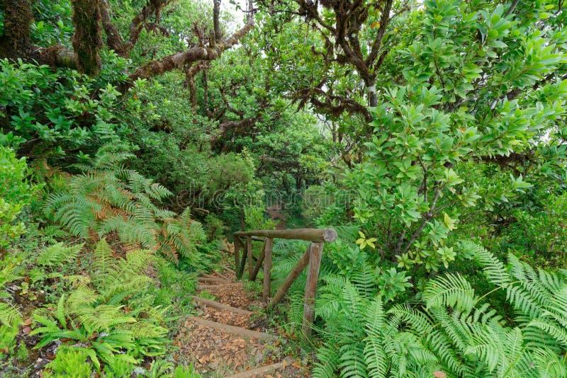 Tiro hermoso de escaleras en el bosque rodeado por los árboles y las plantas fotografía de archivo