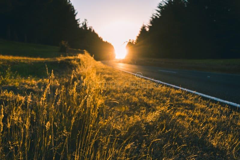 Tiro hermoso de la puesta del sol en la carretera con verdor alrededor foto de archivo