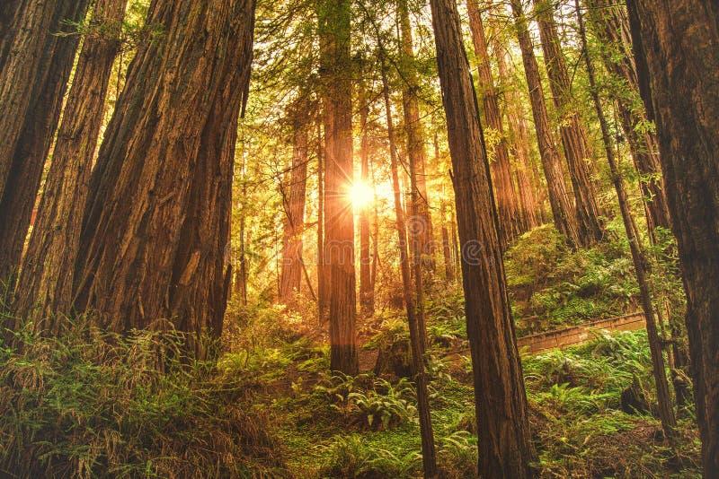 Tiro hermoso de un bosque grueso en una colina escarpada con la luz del sol que brilla a través de los árboles imágenes de archivo libres de regalías