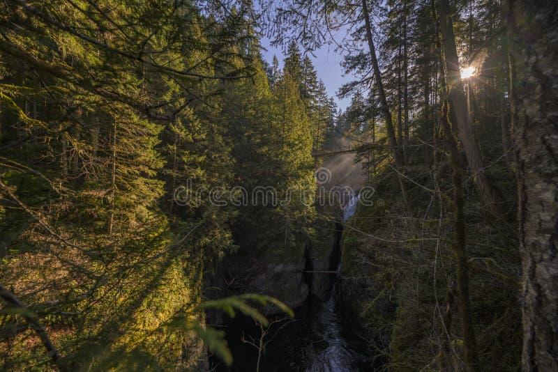Tiro hermoso de un río que fluye entre los árboles imagen de archivo libre de regalías