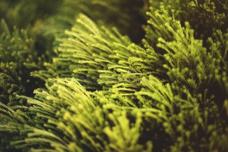 Tiro hermoso del primer de las plantas verdes que agitan debajo del viento en un campo imagen de archivo libre de regalías