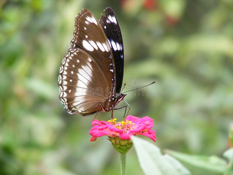 Tiro macro al azar de una mariposa en una flor imagen de archivo