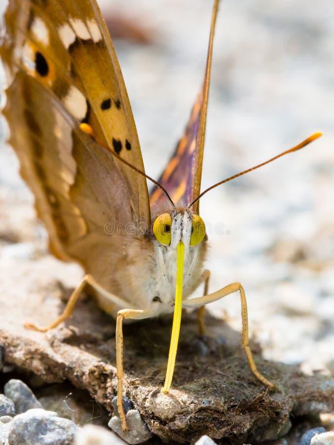 Tiro macro ascendente cercano de la mariposa fotos de archivo libres de regalías