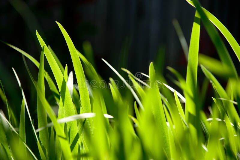 Tiro macro da grama verde imagens de stock