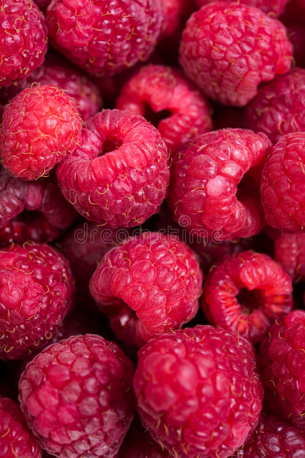 Tiro macro das framboesas maduras frescas, fundo do fruto do verão fotos de stock royalty free