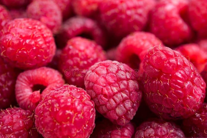 Tiro macro das framboesas maduras frescas, fundo do fruto do verão imagem de stock royalty free