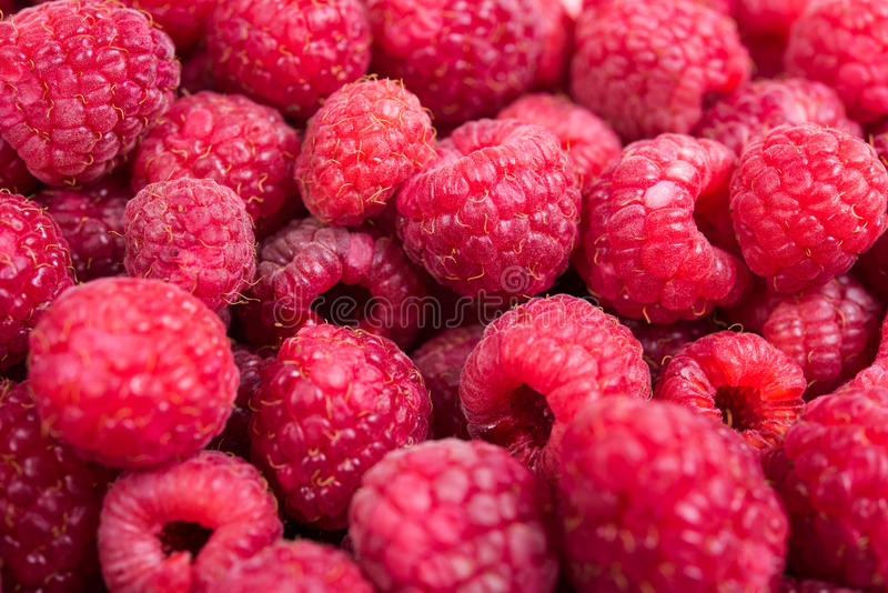 Tiro macro das framboesas maduras frescas, fundo do fruto do verão imagens de stock royalty free