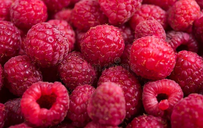 Tiro macro das framboesas maduras frescas, fundo do fruto do verão fotos de stock