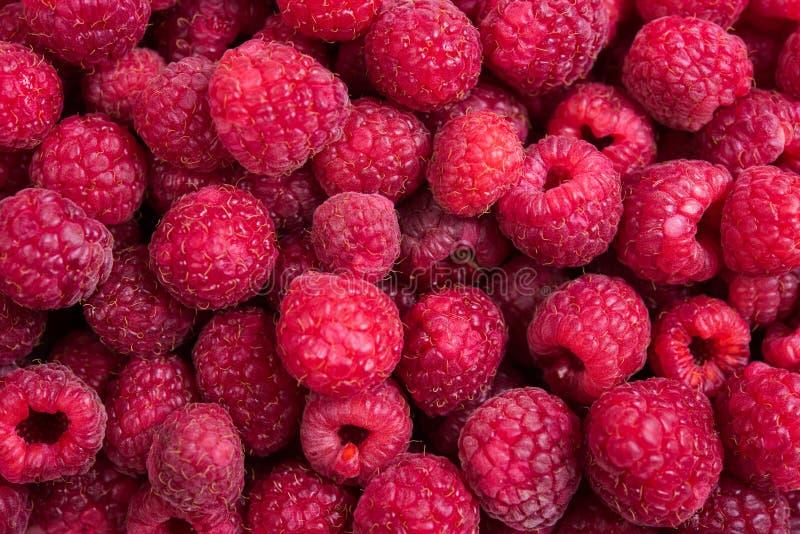 Tiro macro das framboesas maduras frescas, fundo do fruto do verão imagens de stock