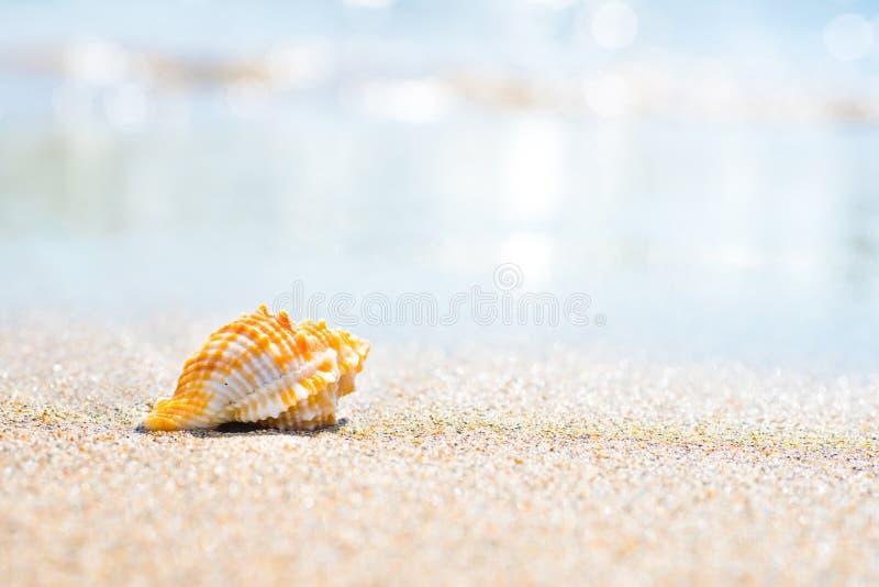 Tiro macro de la c?scara en la playa de la arena imagen de archivo libre de regalías