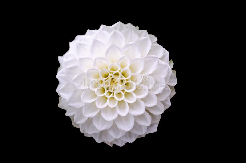 Tiro macro de la flor blanca fotos de archivo libres de regalías