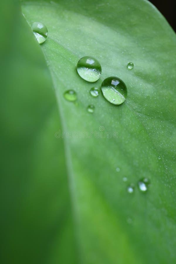 Tiro macro de las gotitas de agua en la hoja vibrante del verde del color, foto vertical imagen de archivo