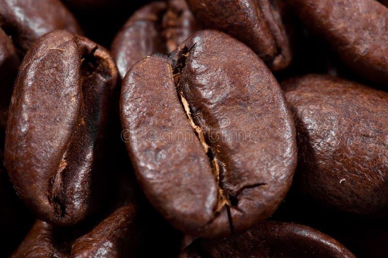 Tiro macro de um feijão de café fotografia de stock