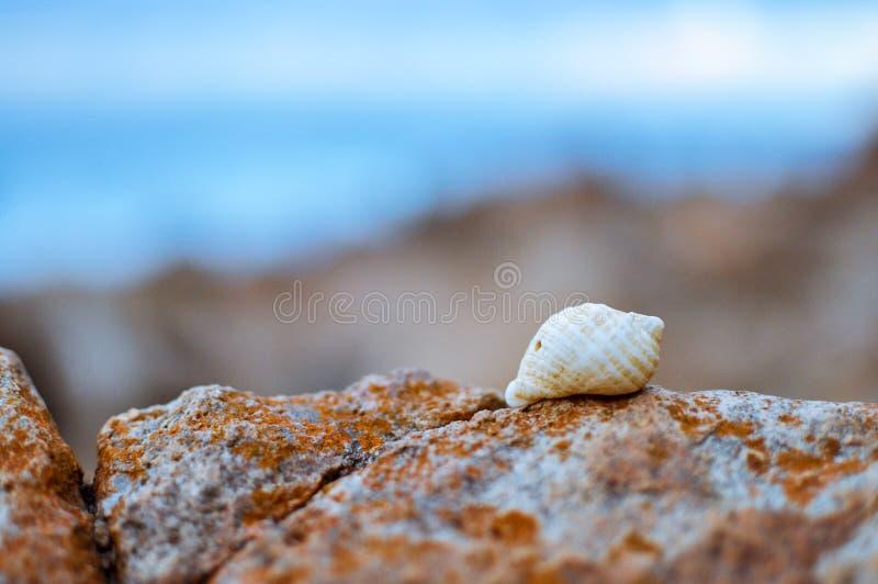 Tiro macro de una concha marina en una roca fotografía de archivo
