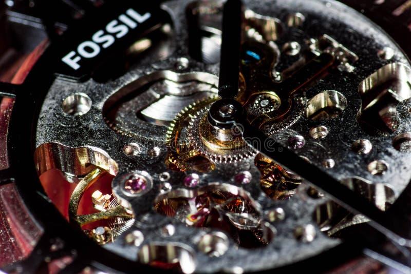 Tiro macro dentro de um relógio fóssil foto de stock