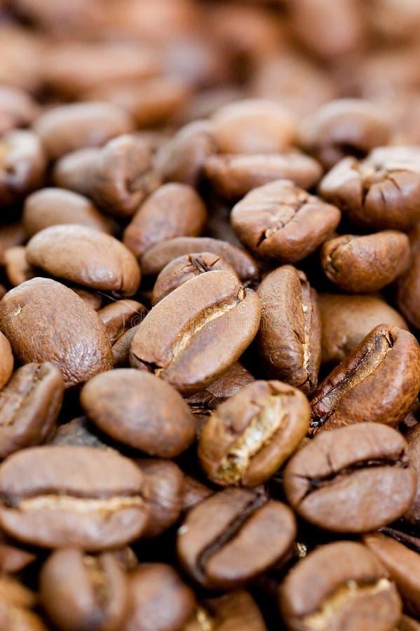 Tiro macro do feijão de café imagens de stock royalty free