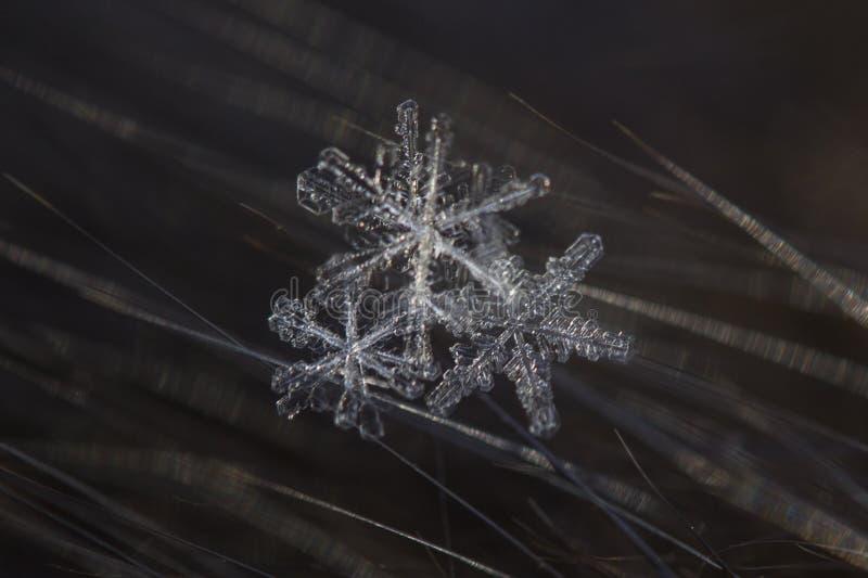 Tiro macro do floco de neve imagens de stock