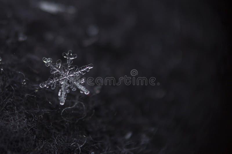 Tiro macro do floco de neve foto de stock royalty free