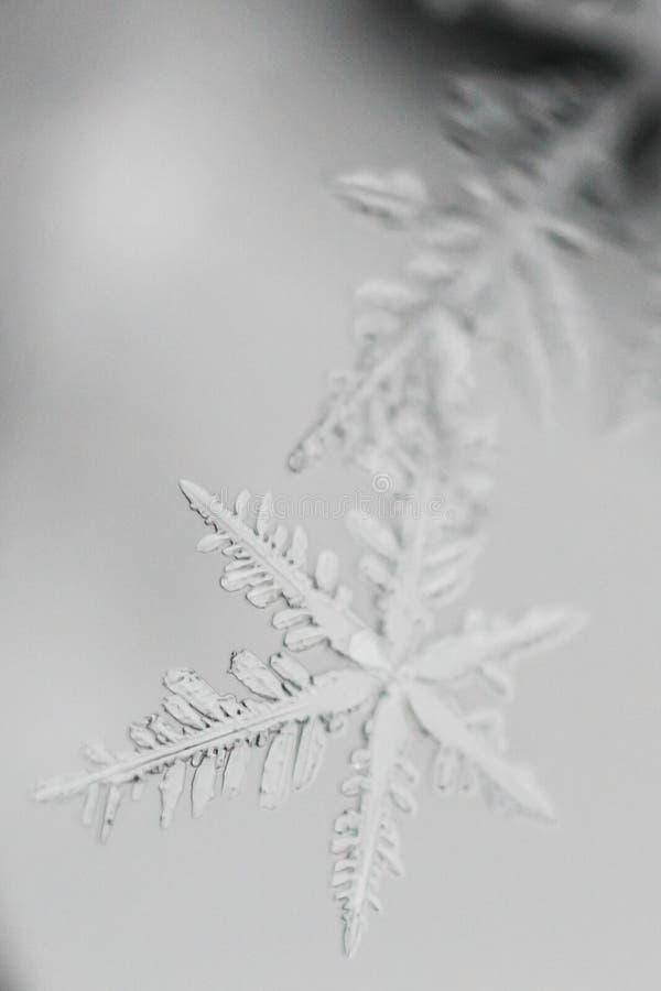 Tiro macro do floco de neve congelado 3 fotografia de stock royalty free