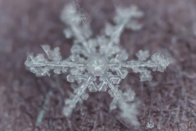 Tiro macro do floco de neve congelado 5 imagens de stock royalty free