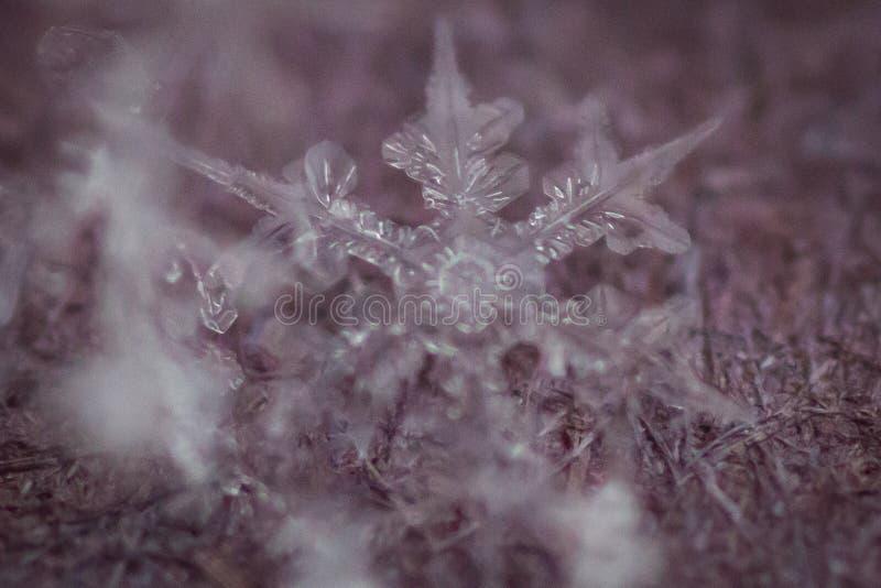 Tiro macro do floco de neve congelado 6 fotografia de stock royalty free