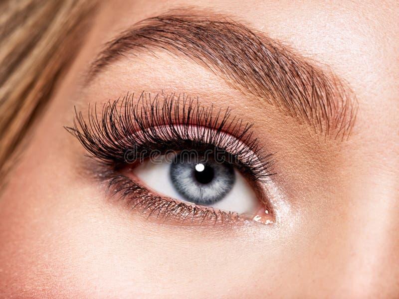 Tiro macro do olho bonito do ` s da jovem mulher imagem de stock