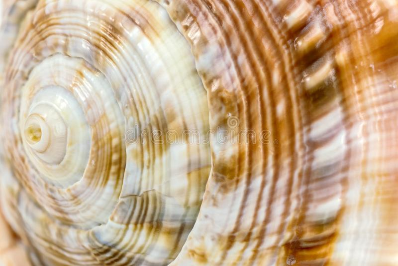 Tiro macro espiral del caracol fotografía de archivo