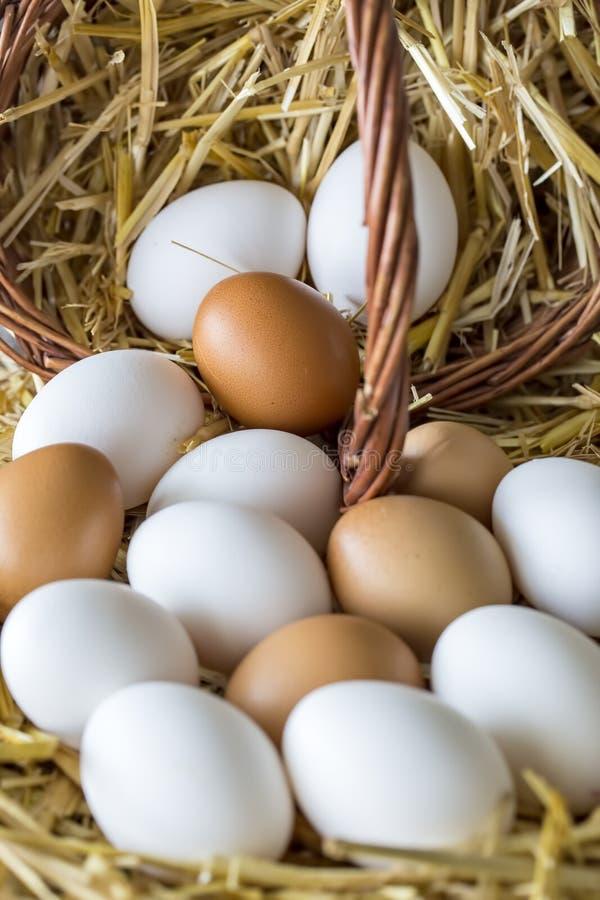 Tiro macro ovos marrons/brancos no ninho do feno na explora??o agr?cola de galinha imagens de stock