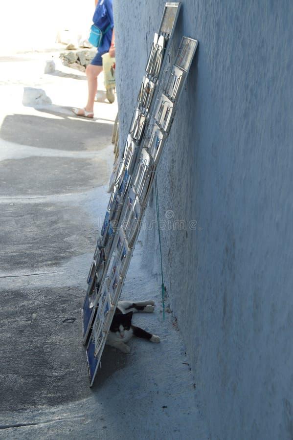 Tiro magnífico de cartão de Cat Behind An Exhibitor Of do refugiado de uma loja de lembrança em Pyrgos Kallistis na ilha de Santo foto de stock royalty free