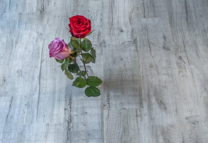 Tiro plano de dos rosas florecientes en un fondo de madera gris Una rosa roja y un rosa subieron foto de archivo libre de regalías