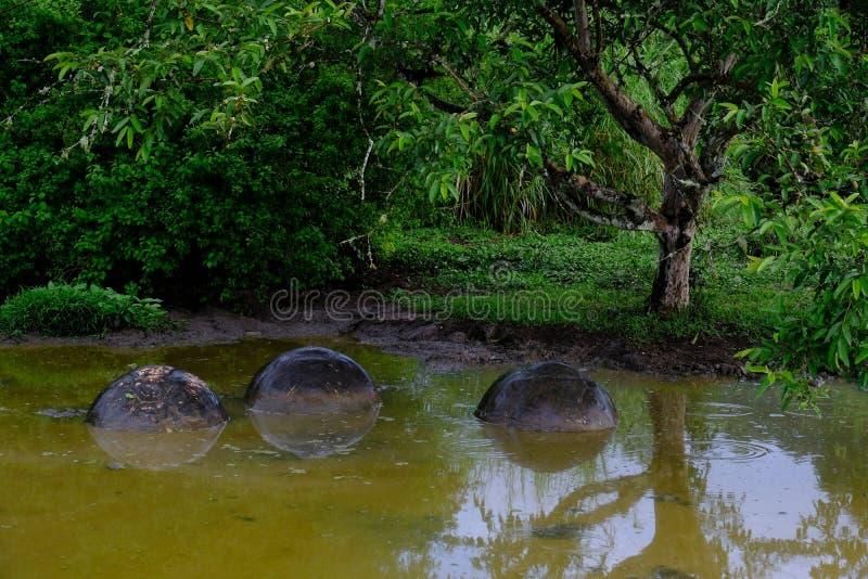 Tiro próximo da água verde com as rochas nele perto de uma floresta fotografia de stock