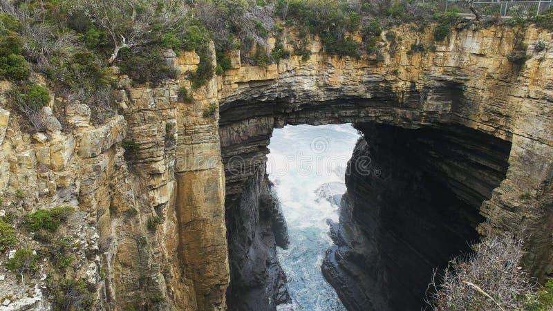 Tiro próximo do arco do tasman no pescoço do eaglehawk em Tasmânia foto de stock royalty free