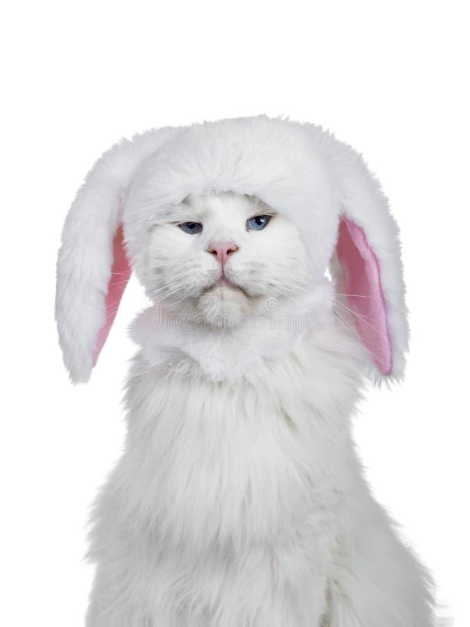 Tiro principal del sombrero del conejito del gato que lleva imagen de archivo libre de regalías