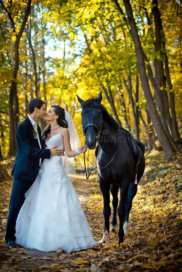 Tiro romântico completo do casamento O par elegent feliz de recém-casados está friccionando levemente os narizes durante sua cami imagem de stock