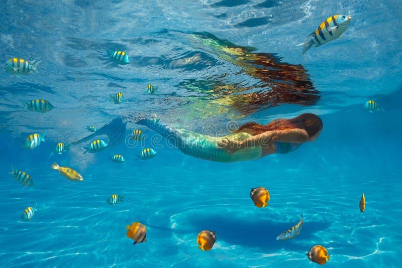 Tiro subaquático foto de stock