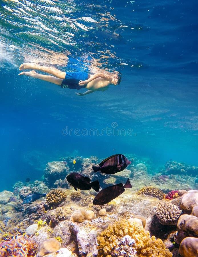 Tiro subaquático de um menino novo que mergulha no Mar Vermelho foto de stock
