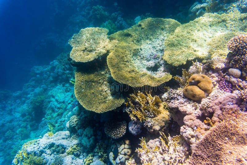 Tiro subaquático do recife de corais com peixes minúsculos na água clara fotografia de stock