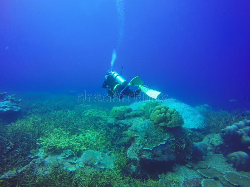Tiro subaquático dos mergulhadores que nadam na água clara azul fotos de stock royalty free