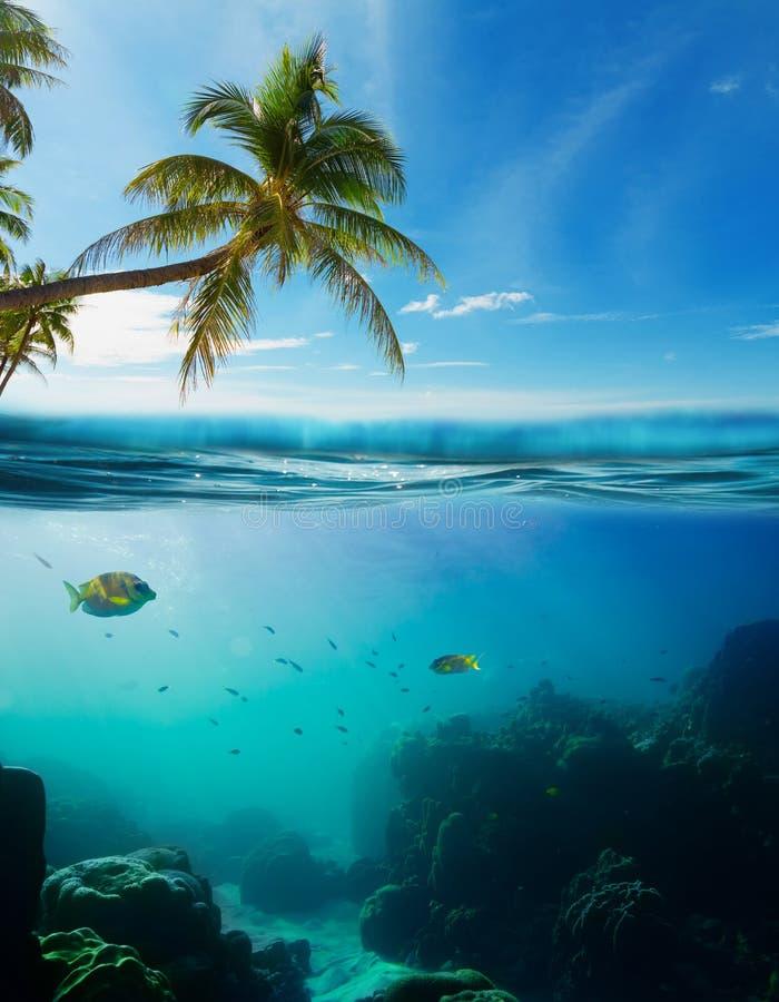 Tiro subaquático tropical splitted com superfície foto de stock royalty free
