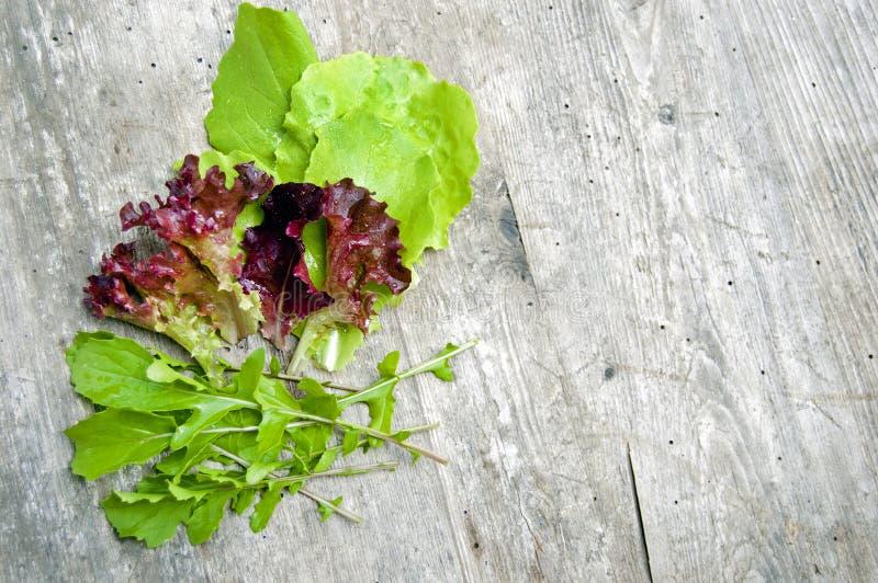 Tiro superior, cierre para arriba de diversos tipos de lechuga recién cosechada verde y roja, púrpura, lechuga rizada, rucola, ar imagenes de archivo
