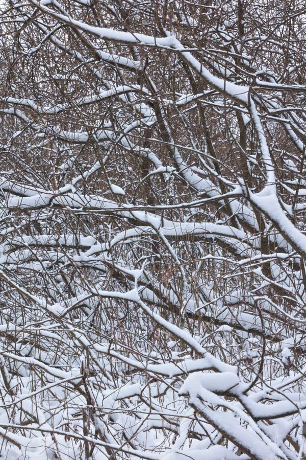 Tiro vertical de troncos de árvore sob a neve fotografia de stock