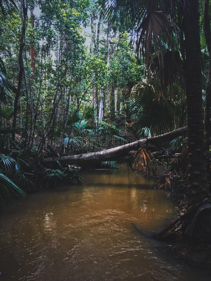 Tiro vertical de uma árvore caída sobre um lago em uma floresta com árvores altas foto de stock