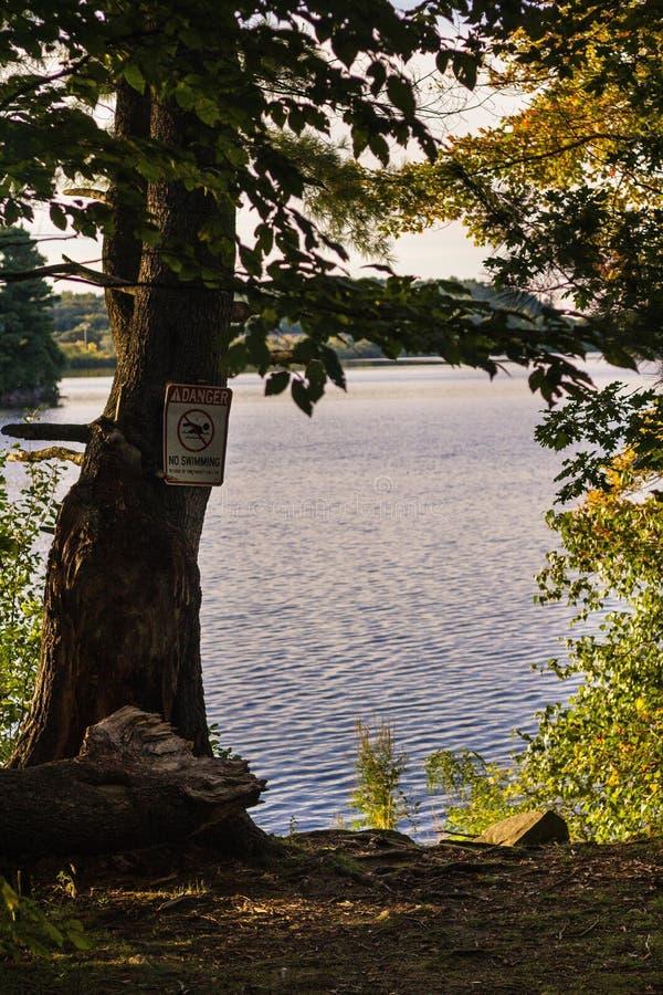 Tiro vertical de un árbol hermoso en un día soleado con el mar en el fondo fotos de archivo