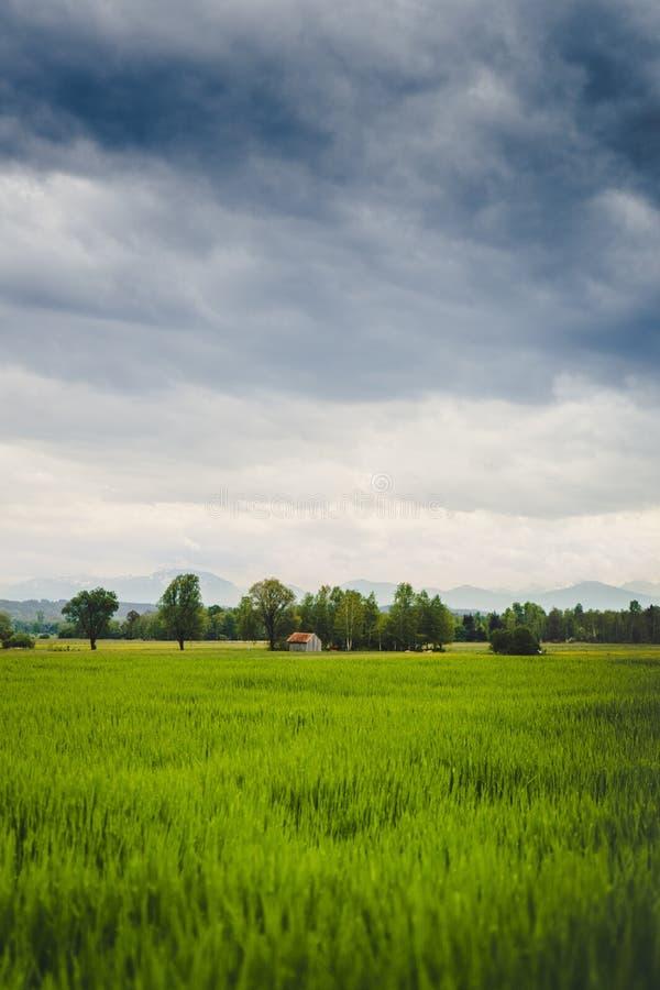 Tiro vertical de un campo verde hermoso con un granero viejo visible en la distancia imágenes de archivo libres de regalías