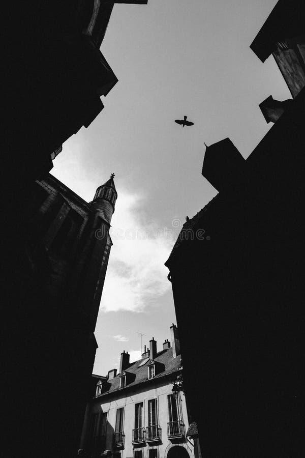 Tiro vertical de una silueta de edificios y un vuelo del pájaro en el cielo en blanco y negro imágenes de archivo libres de regalías