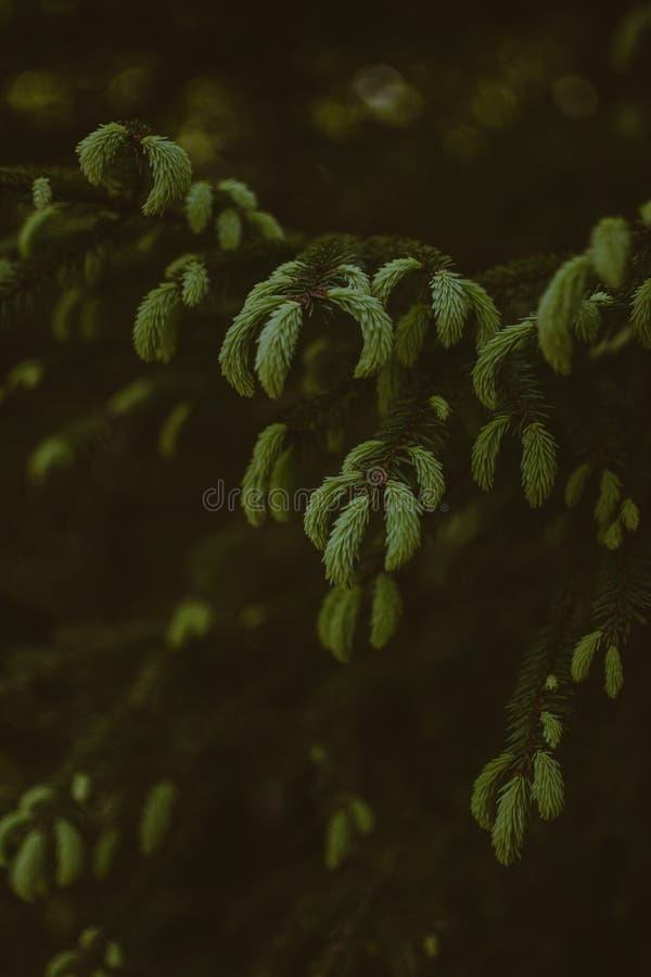 Tiro vertical del verdor hermoso en un bosque foto de archivo