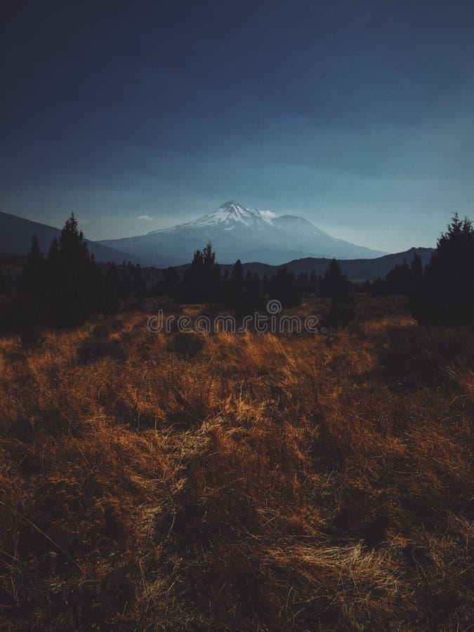 Tiro vertical do campo de grama amarela e verde perto de uma silhueta de uma floresta com uma montanha imagem de stock royalty free